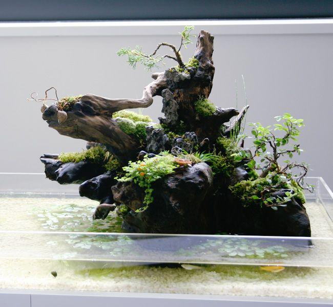 Aqua terrarium 1