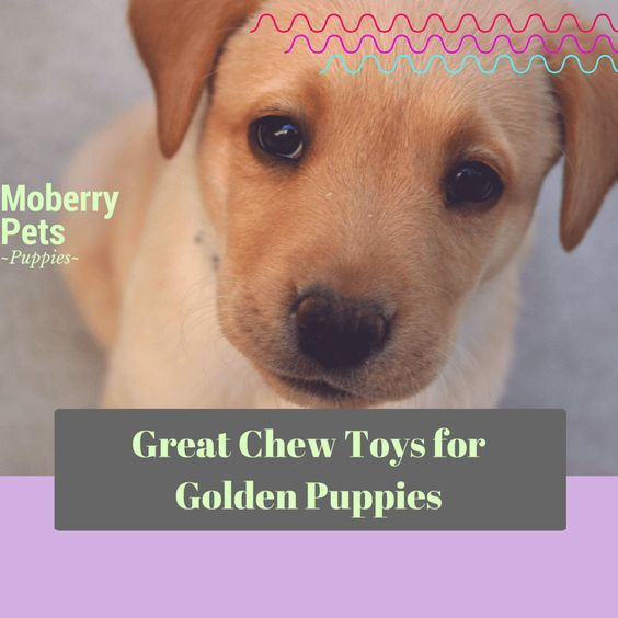 Best Chew Toys For Golden Retriever Puppies Dog Themed Parties