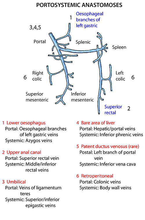 Instant Anatomy - Abdomen - Vessels - Veins - Portosystemic ...