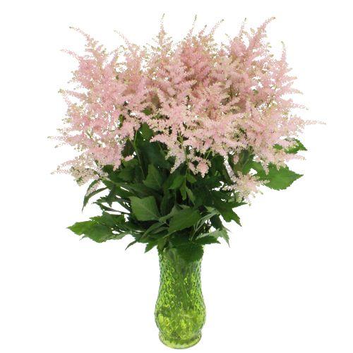 White Astilbe Flower Fiftyflowers Com Astilbe Flower Astilbe Tropical Wedding Flowers