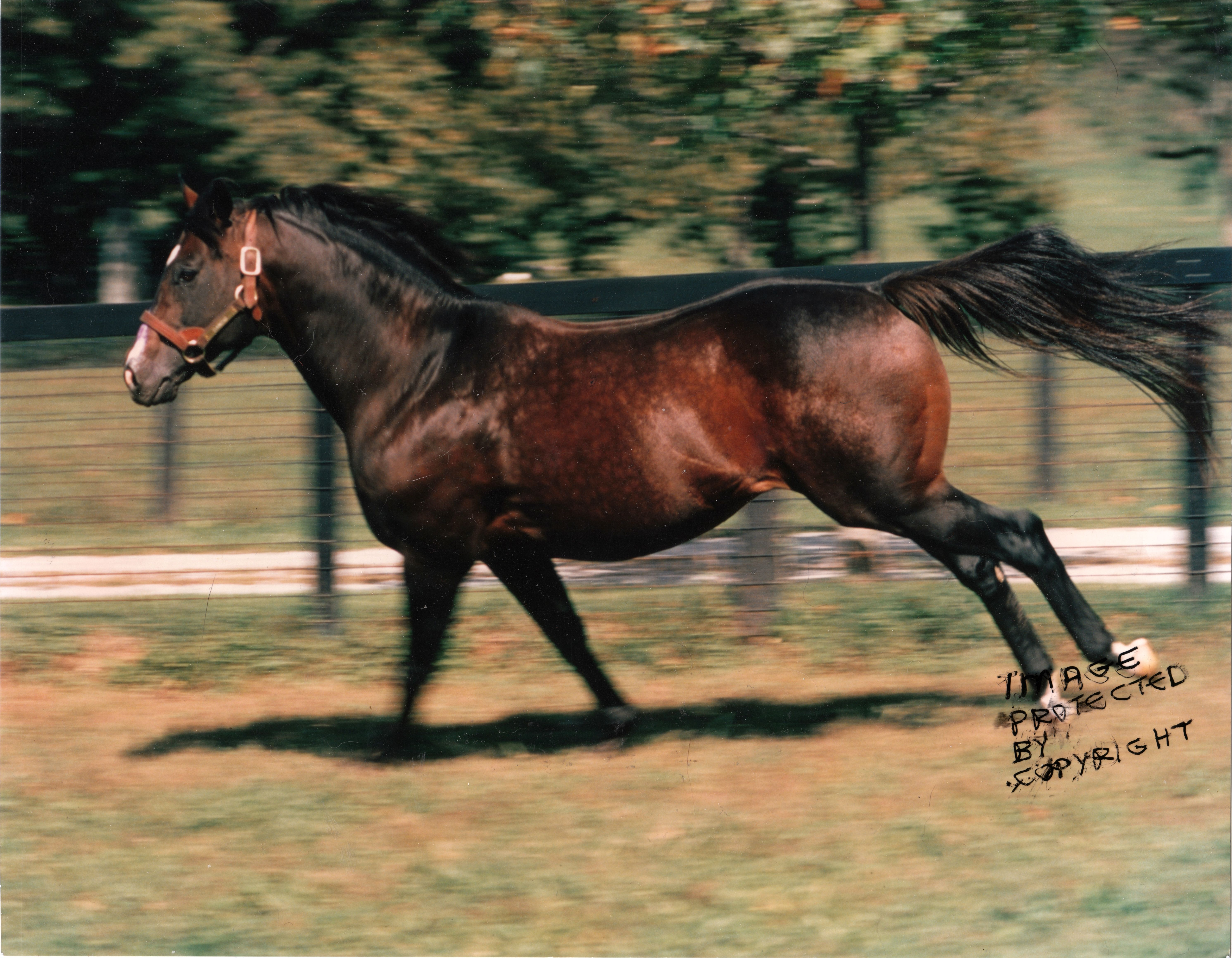 Danzig- Champion Sire Three Years In A Row In 1991-93. His Crops ...