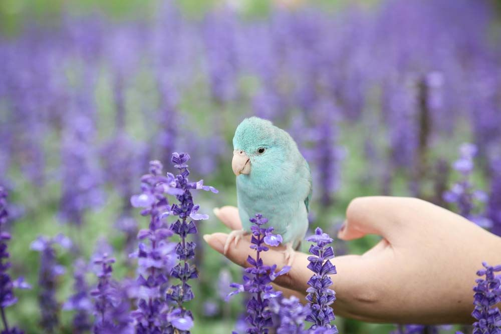 Recently Parrotlets Are Considered From The Smallest Captivating Birds And This Is Due To Their Cuteness Active Behavior An Parrotlet Parrot Budgie Parakeet