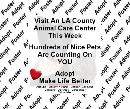 """MIPooh on Twitter: """"#LosAngeles Steps Up For A Cause  Homeless #Pets  #Adopt 1 Visit An LA County Animal Care Ctr This Week #Dogs #Cats https://t.co/iintWU9K3x https://t.co/VeSEs7wwsJ"""""""