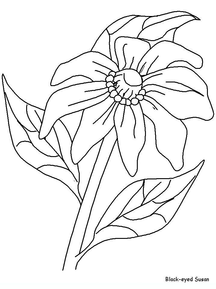Flowers 28 Flowers Coloring Pages Coloring Pages Flower
