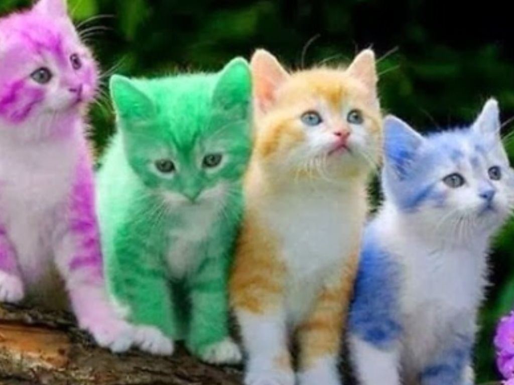 Found the cutest kitty Crüe all theses kittens must have