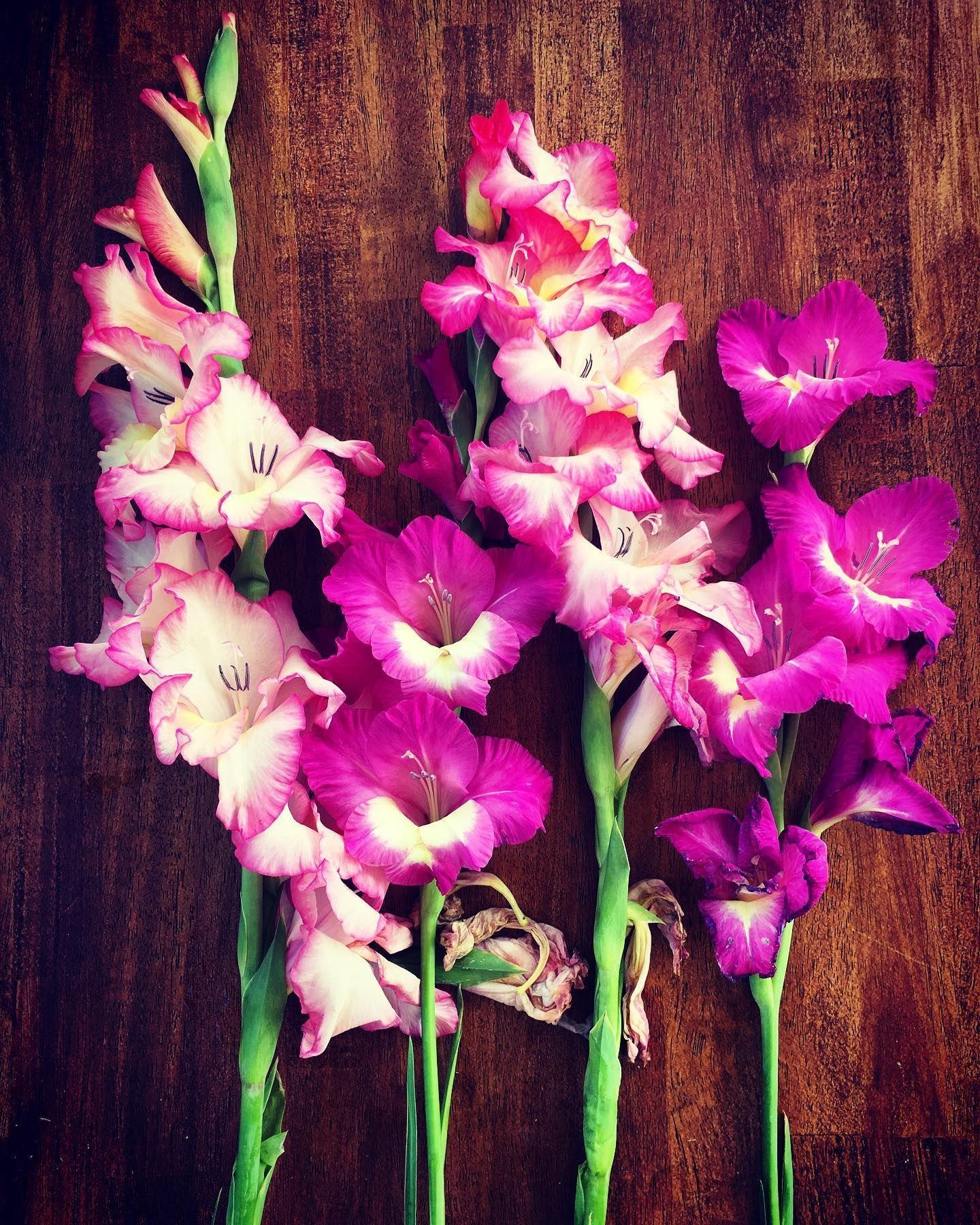 #botanicaldreamers #theslowdowncollective #floralinspiration #flowerlover -  #botanicaldreamers #theslowdowncollective #floralinspiration #flowerlover   - #botanicaldreamers #Clematis #Daffodils #EnglishRoses #floralinspiration #flowerlover #Gladioli #Irises #theslowdowncollective #Tulipi