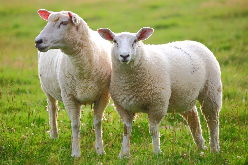 Forget Sheep: Orthopod Counts Bones to Fall Asleep Each