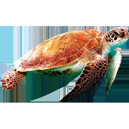 A Sea Turtle Reflecting Orange In The Sunlight From Above Sea Turtle Drawing Save The Sea Turtles Sea Turtle