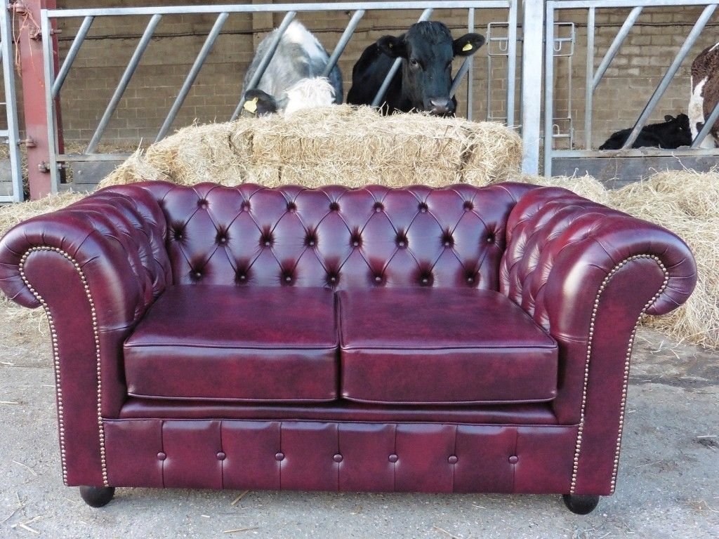 Recover Of Leather Chesterfield Sofa   Hill Upholstery