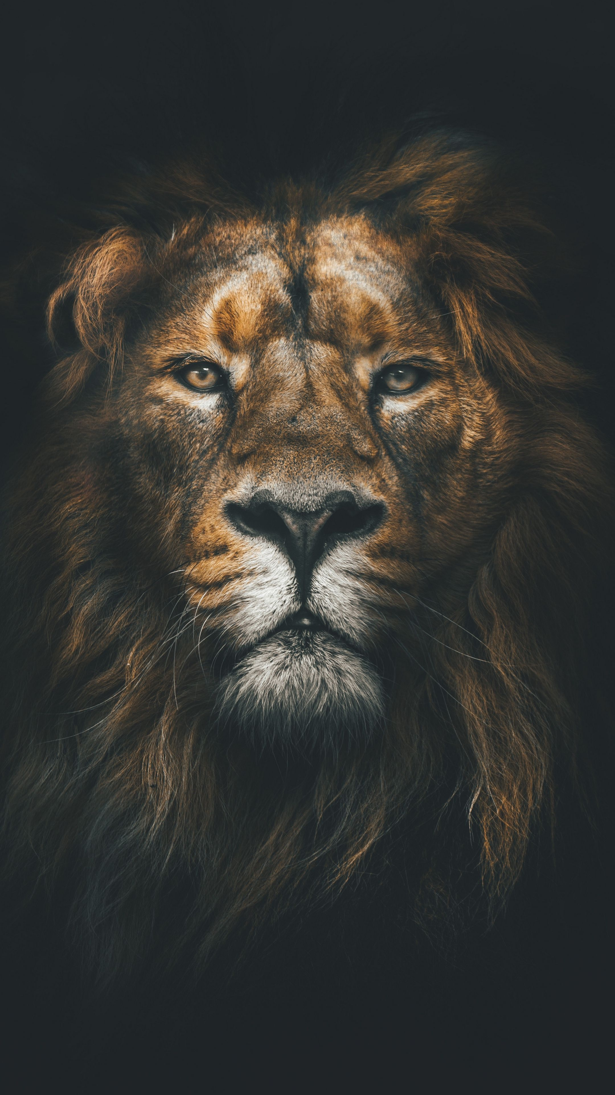 Animals lion, muzzle, mane android wallpapers 4k hd