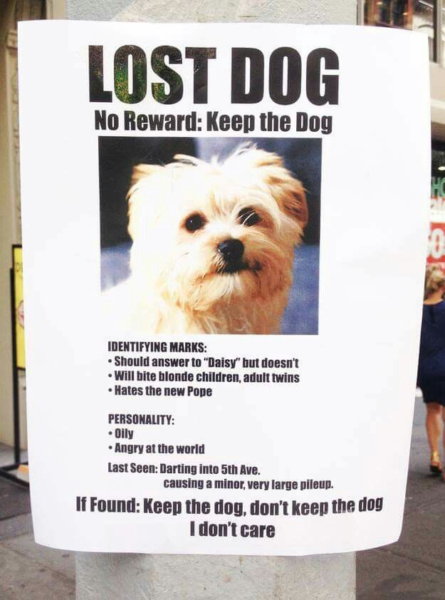 Pin by Yolanda Thompson on Witticisms and Thinkery Pinterest - Lost Dog Flyer Examples