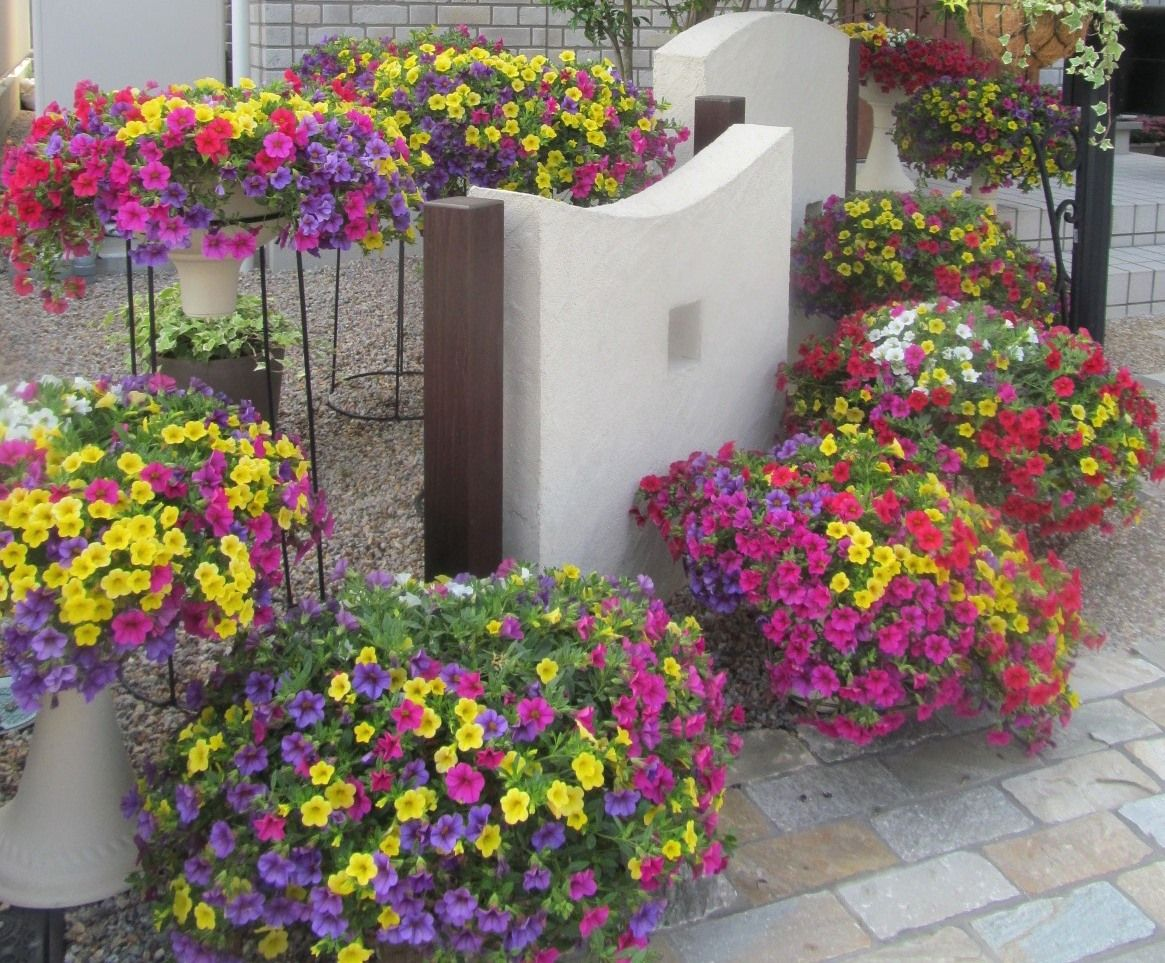 Calibrachoa Million Bells Combos From Suntory Year Of The