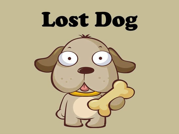 Pin auf Photos from Lost Dogs Minnesota