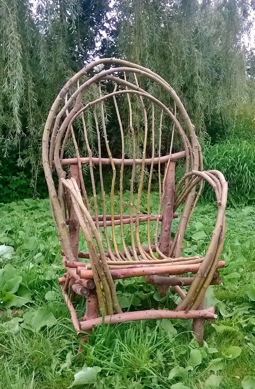 Adult Willow Chair, Bent In Place While Green.
