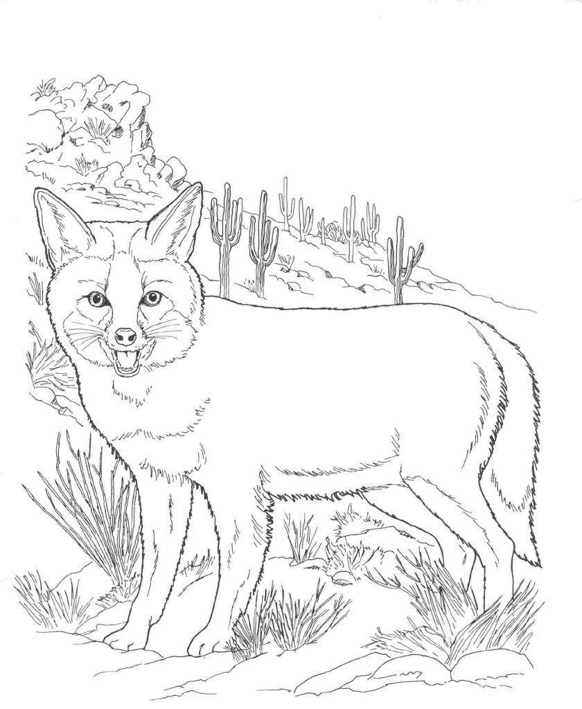 Coloring Rocks Desert Animals Coloring Fox Coloring Page Animal Coloring Pages