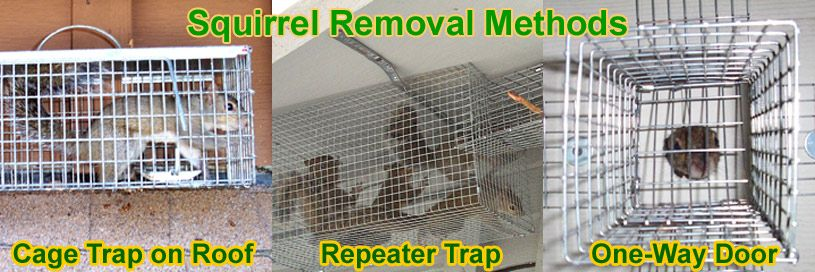 How to Get Rid of Squirrels Get rid of squirrels