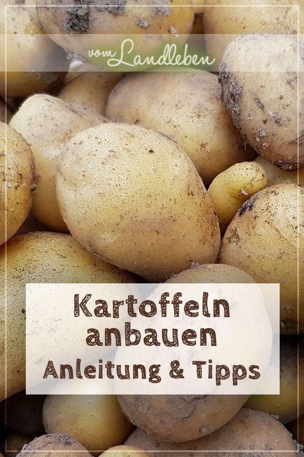 Kartoffeln anbauen: die Komplett-Anleitung & meine Tipps | vom Landleben