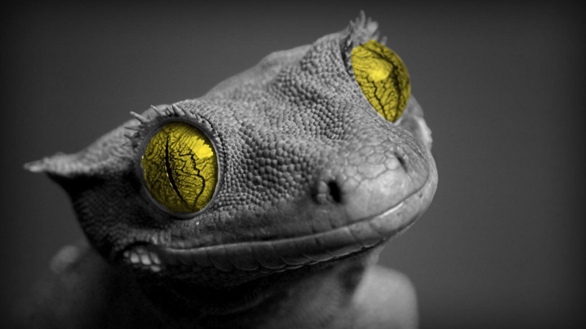 Furious Colorful Lizard Wallpaper HD Animals and Birds 3D