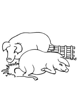 Ausmalbild Schweine Auf Dem Bauernhof Ausmalbilder Ausmalen Ausmalbilder Tiere