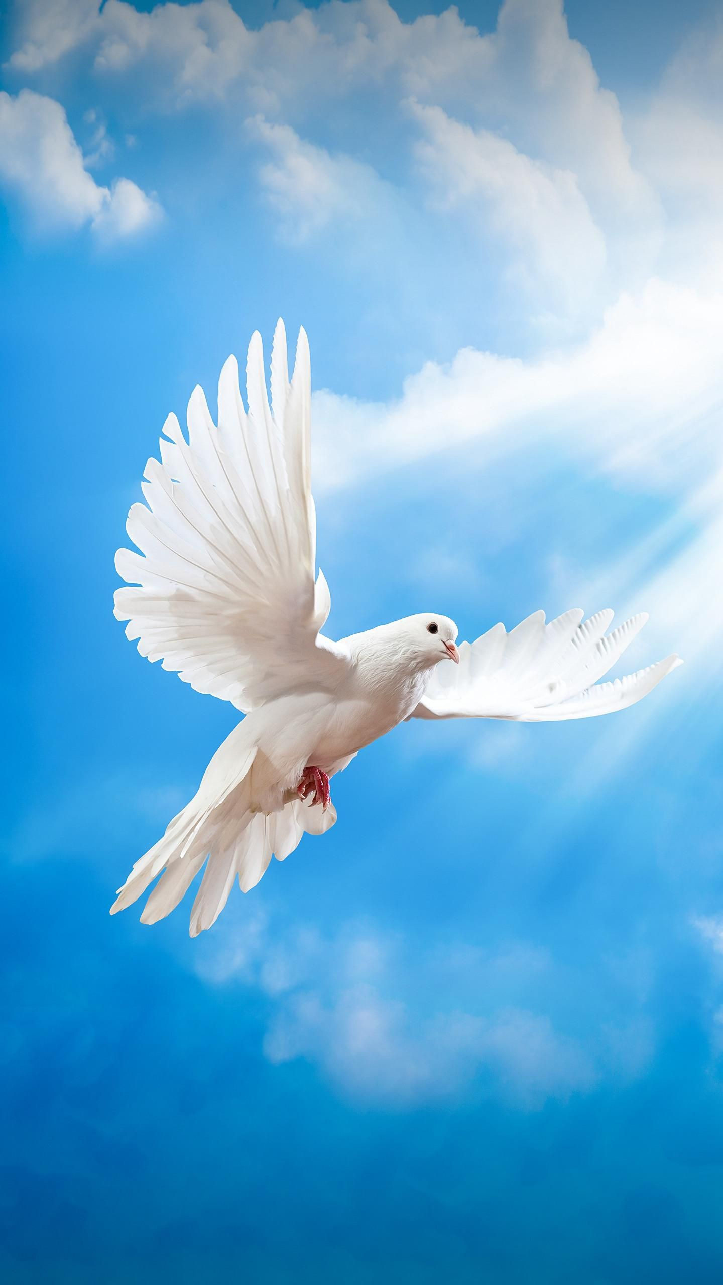 Pigeon Symbolism Of Peace Happy Animals Pinterest Happy