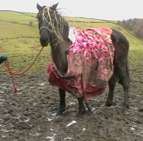 One Torn Filthy Horse Rug Just Waiting To Be Washed And Repaired