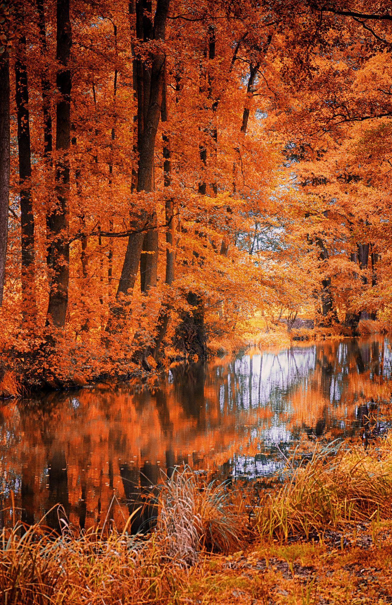 10 Top Fall Leaves Wallpaper For Desktop FULL HD 1080p For