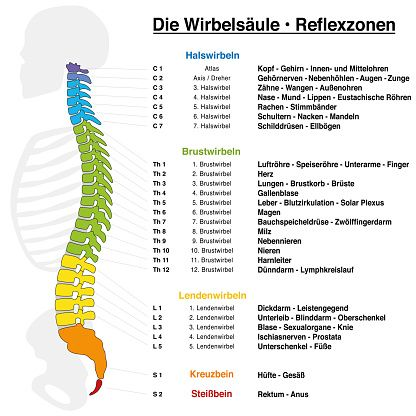 Backbone reflexology chart with accurate description of