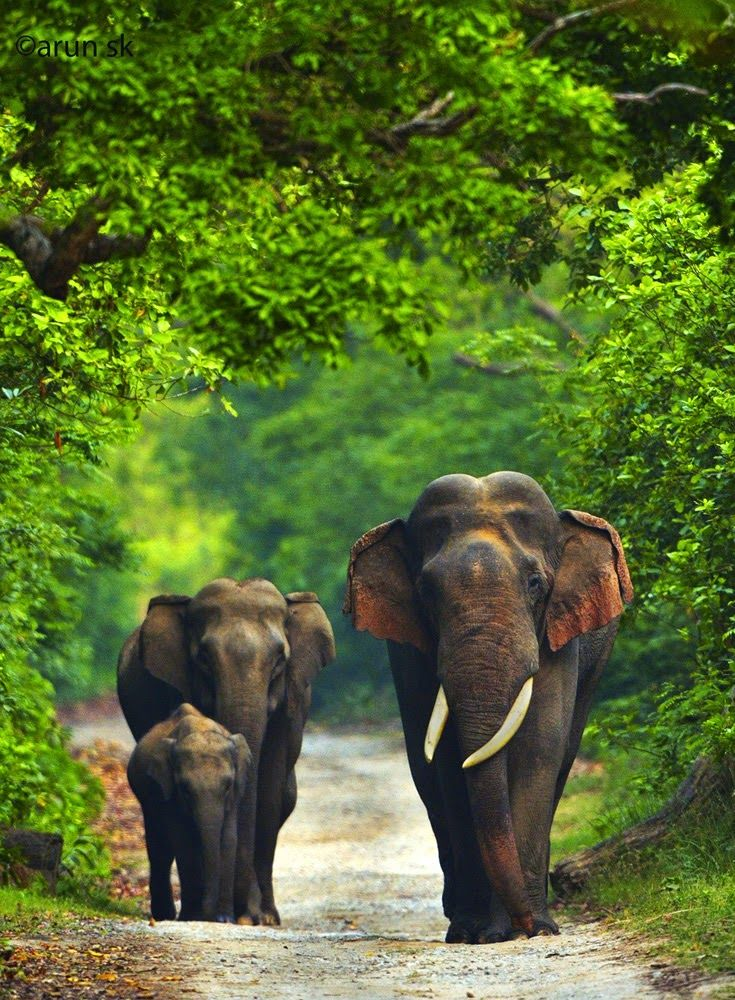 Happy Elephant Family At Corbett National Park India Image Happy Elephant Animals Beautiful Elephant