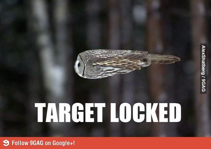 The Rocket Owl Animal Jokes Owl Animals
