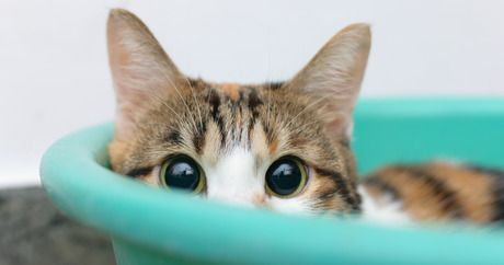 Helping your shy cat feel more comfortable - CatTime