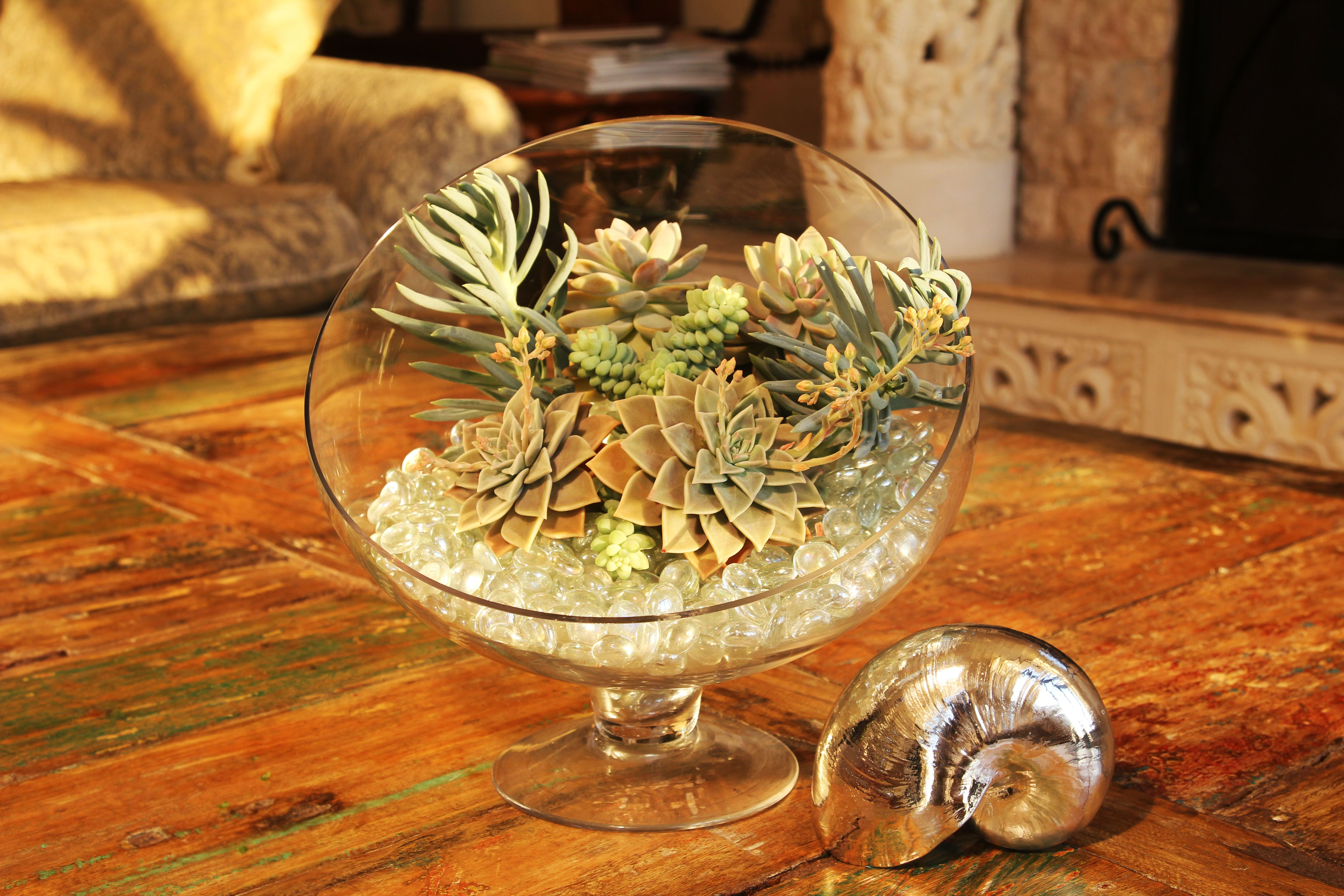 For This Succulent Arrangement I Used A Decorative Glass Bowl