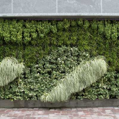 raised deck green wall below   Green wall, Covered patio ... on Green Wall Patio id=35818