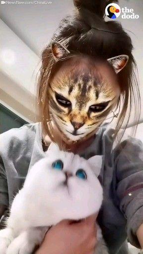 � Wenn Katzen realisieren das du ein Handy in der Hand hast