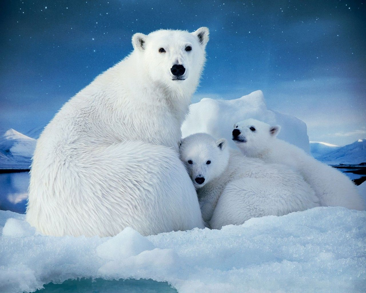 X Five Polar Bear Mama Polar Bear and Cu...