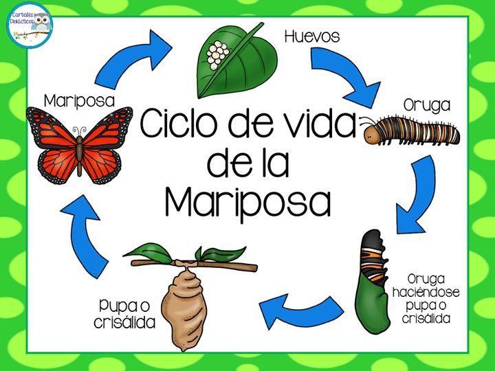 Pin By Contdeteresa On Ciclo De La Vida Butterfly Life Cycle Life Cycles Life