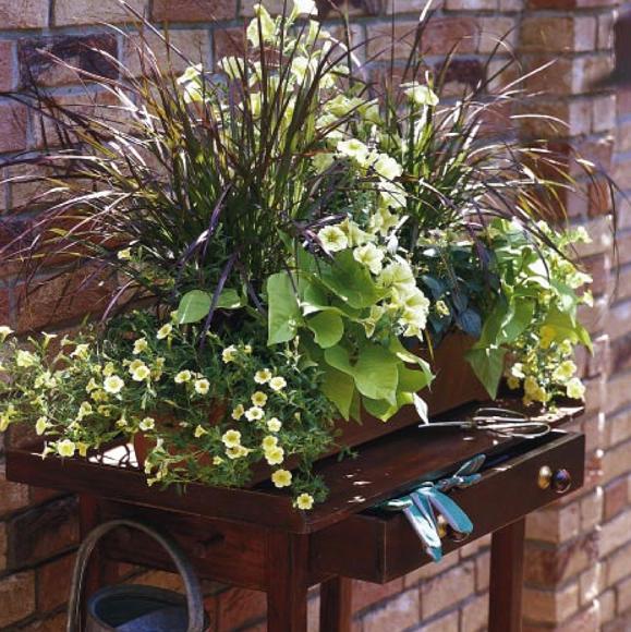 balkonk sten ideen f r alle jahreszeiten zum nachpflanzen balkonkasten mit s kartoffeln. Black Bedroom Furniture Sets. Home Design Ideas