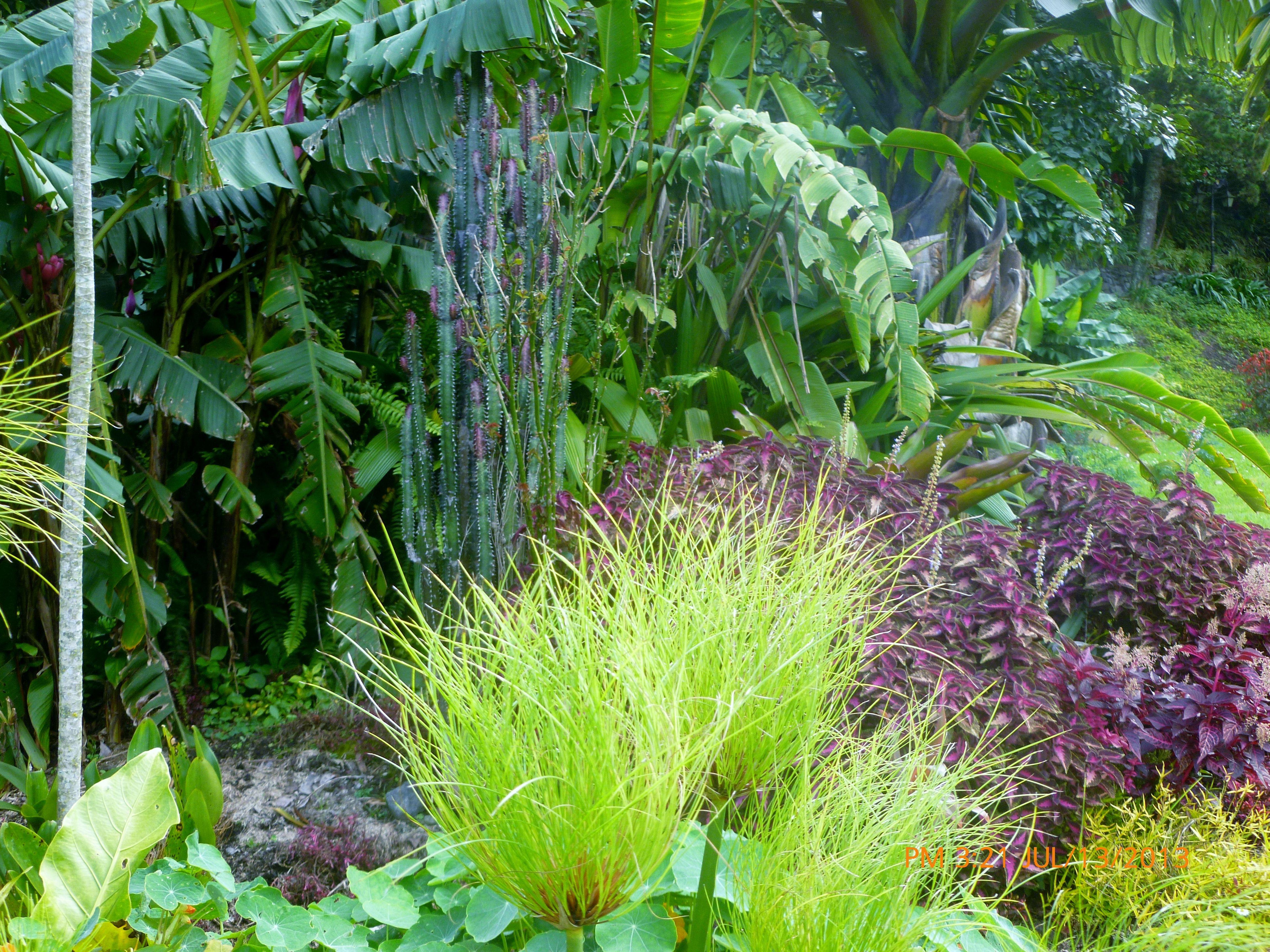 Jardines Banos Ecuador