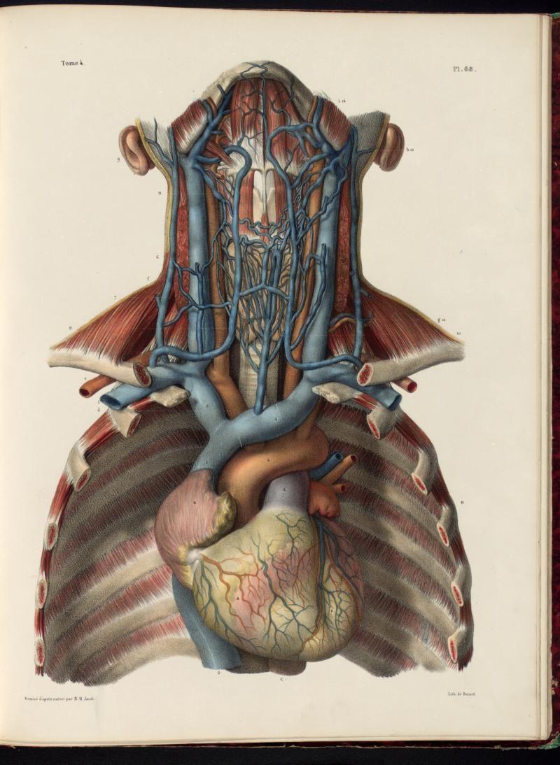 Anatomia Collection Uoft Libraries Plate Description Anatomia