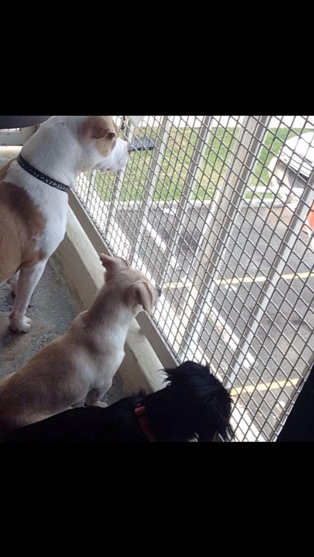Seguridad Canina!!!