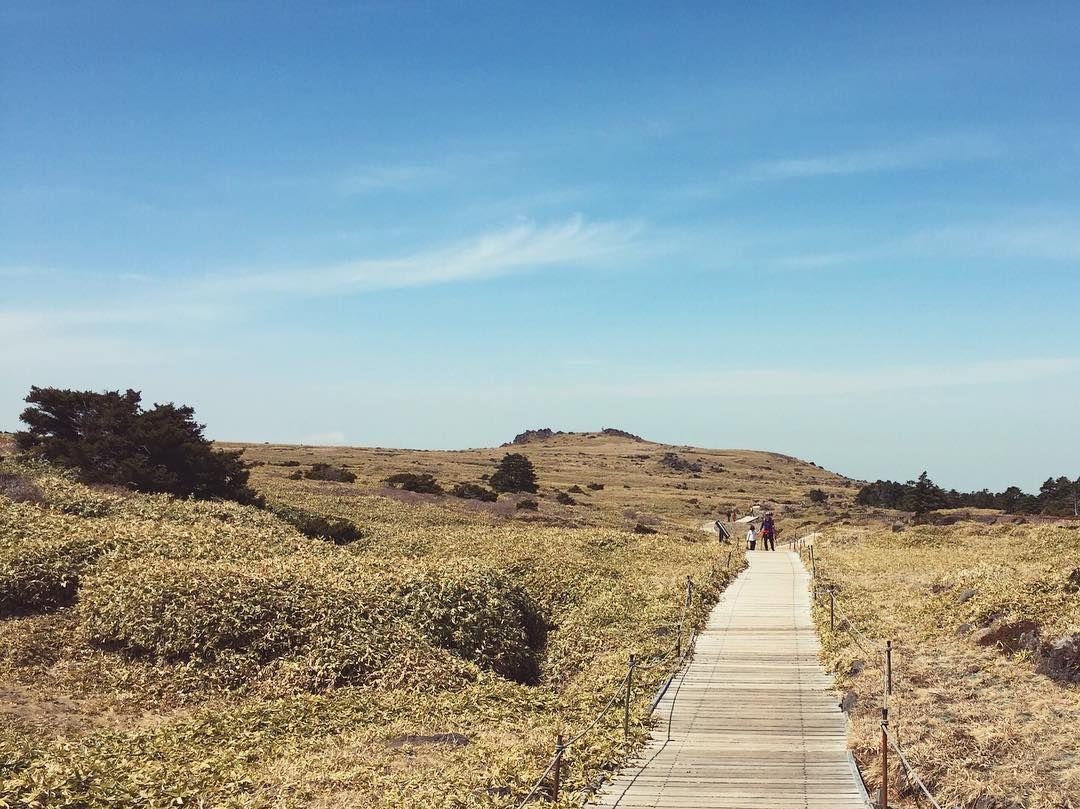 #윗세오름 #한라산 #제주도 #제주여행 #등산 #풍경 #감성 #스냅사진 #snapshot #sentimental #jeju_korea #jeju #hiking #mountain #trip #landscape #scenery #vscocam #path #beautifulplace #naturelovers #family by jk_spotting