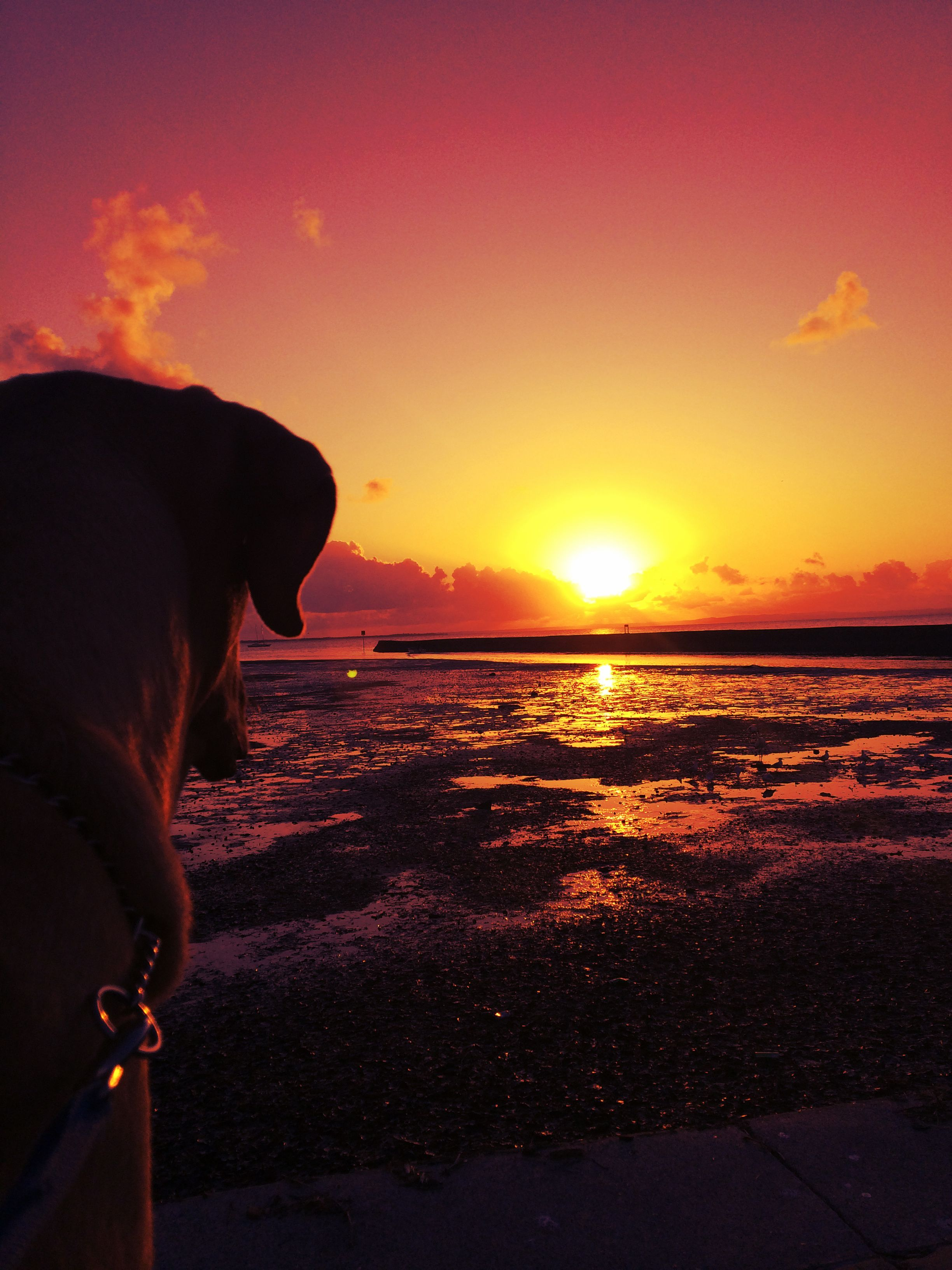 #11. Dogs. They are flat out amazing creatures. This is Chester, my bullmastiff, watching the sun go down with me in Wynnum.