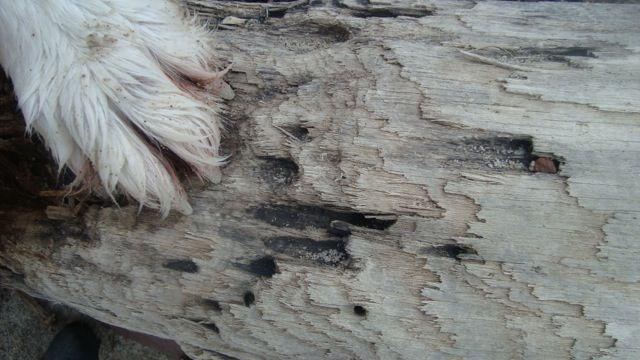 Drivtømmer - driftwood  http://www.edc.dk/sag/5953-tranekær/sletøvej-5-59000850/?billede=1