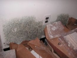 How To Get Rid Of Mold In The Bathroom Or In A Hidden Area Black - How to get rid of mold in your bathroom