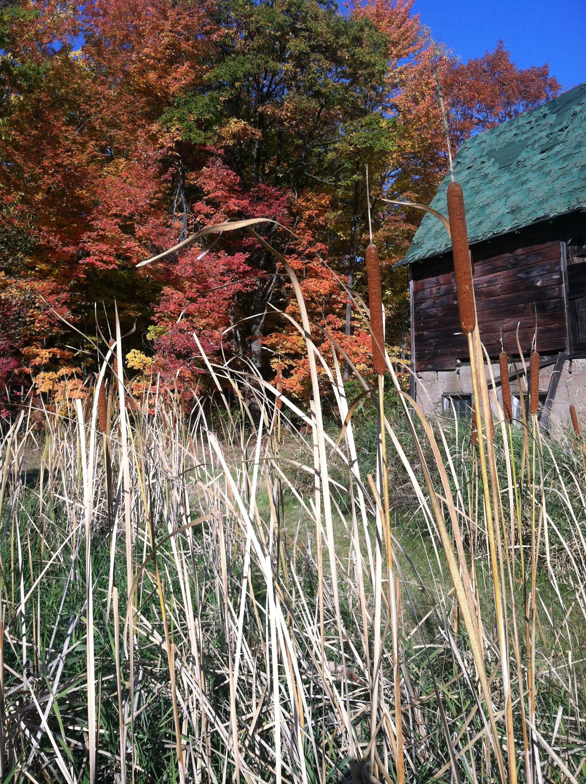 Grandpa's barn in fall.