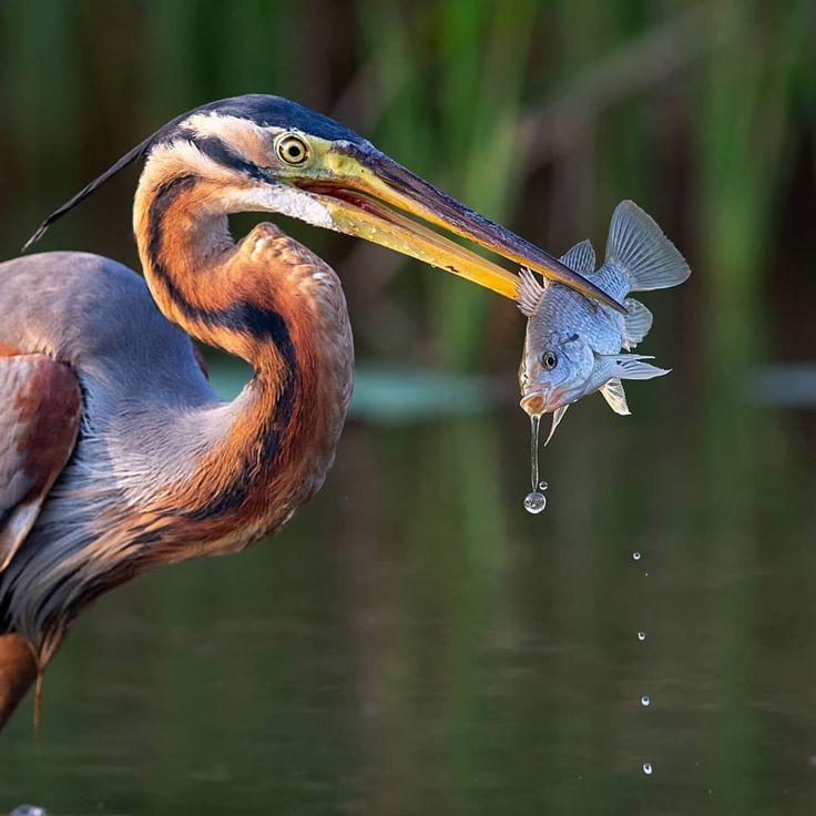 Striking Bird Photography by Johnson Chua #photography #wildlife #bird #birdphotography #nature