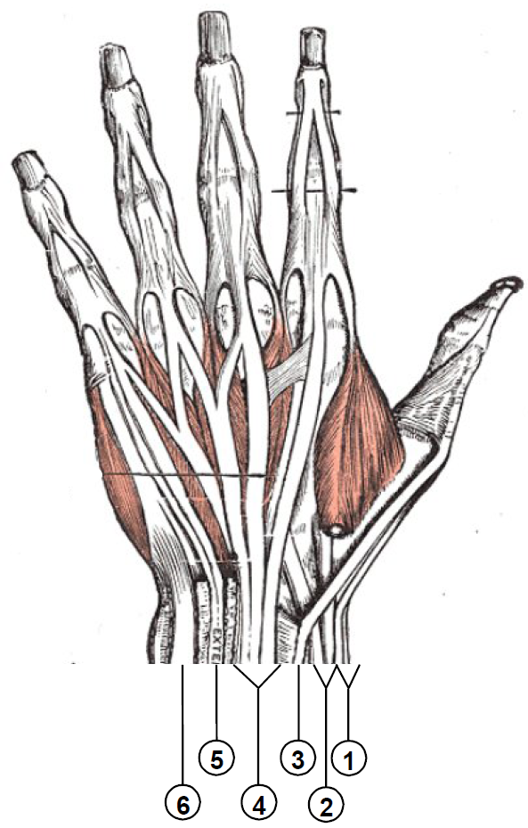 left hand wrist anatomy - Google Search | Inside Out | Pinterest