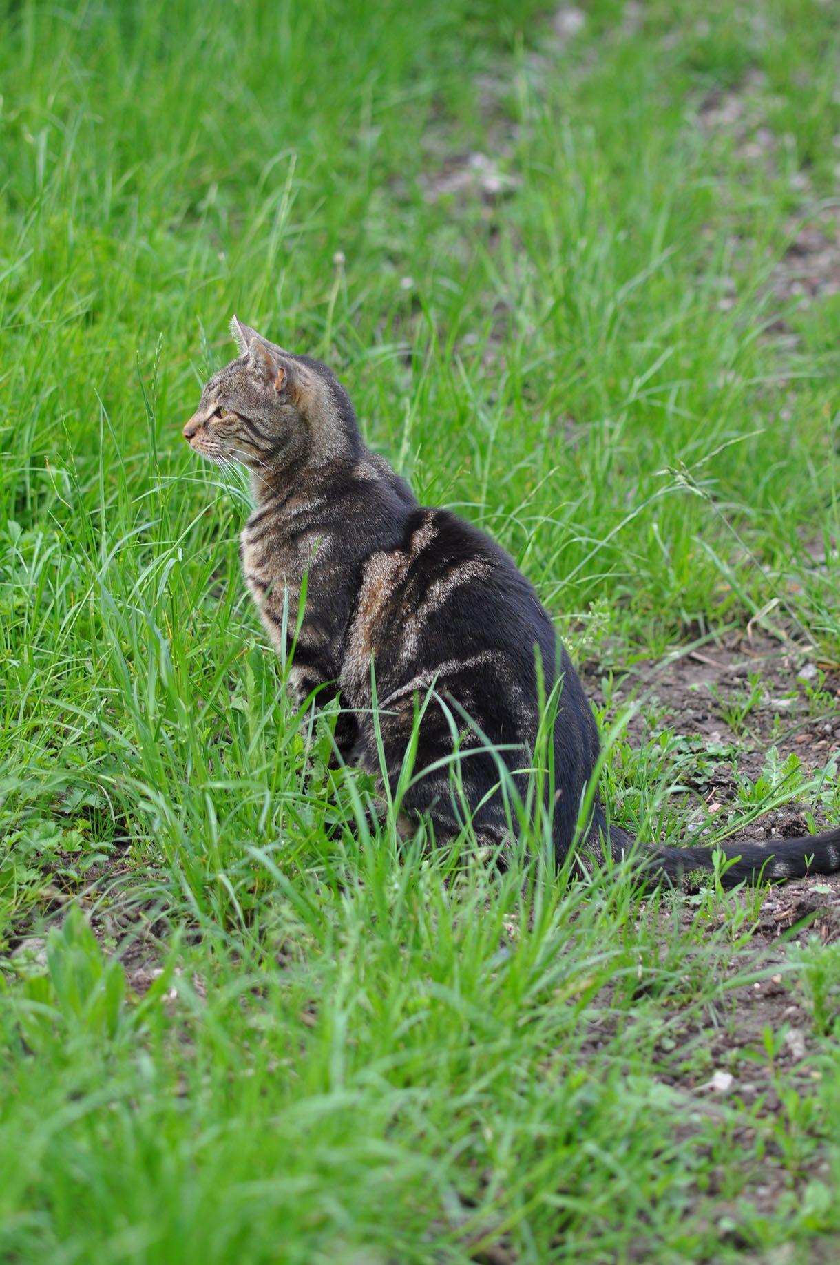 Comment Planter Du Muguet comment éloigner les chats de votre jardin ? | eloigner les