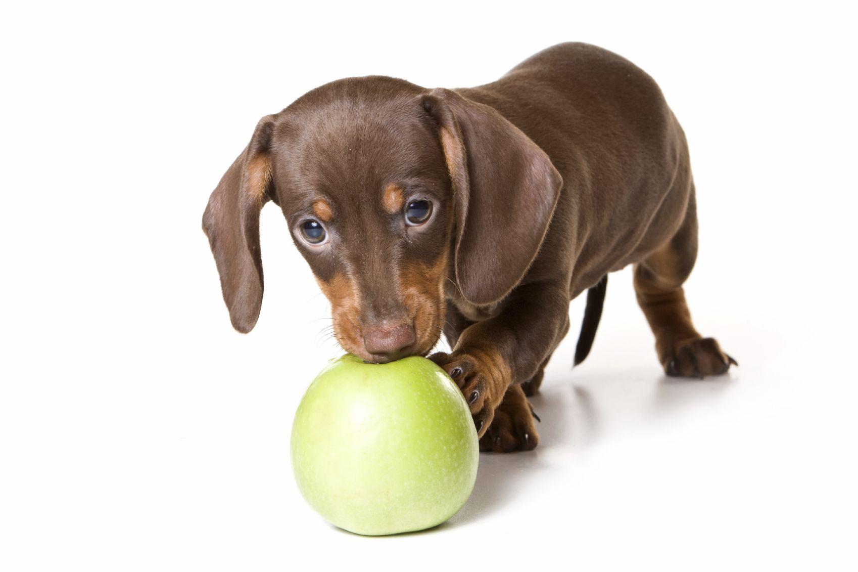 Mini Me Apple Tart Recipe Dog Food Recipes Can Dogs Eat
