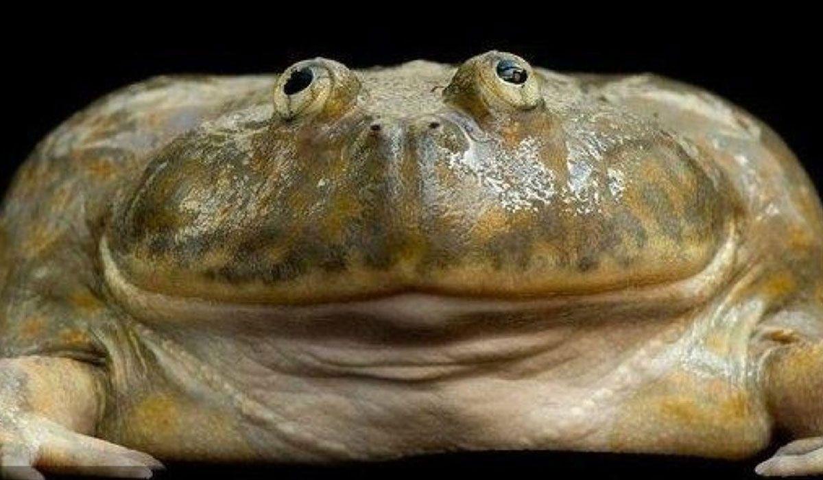 Картинка прикол жаба, летием открытки