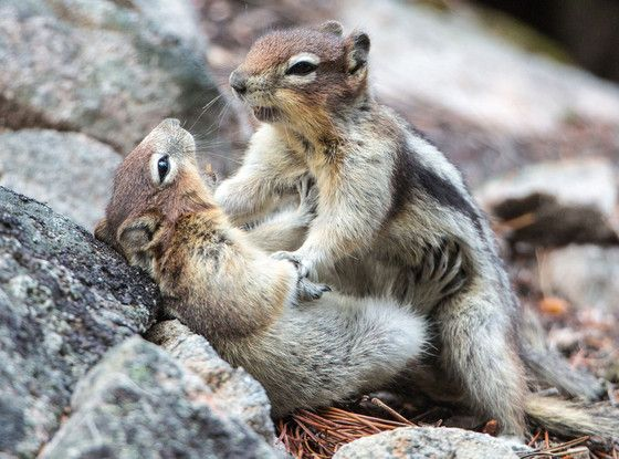 You Have To See These Pictures Of Two Squirrels PlayFighting - Cat squirrel playing cutest thing youll see day
